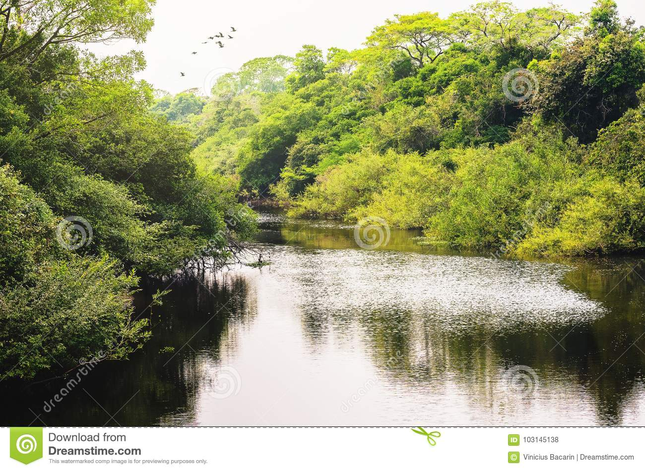 Landscape of a river surrounded by forest of green vegetation