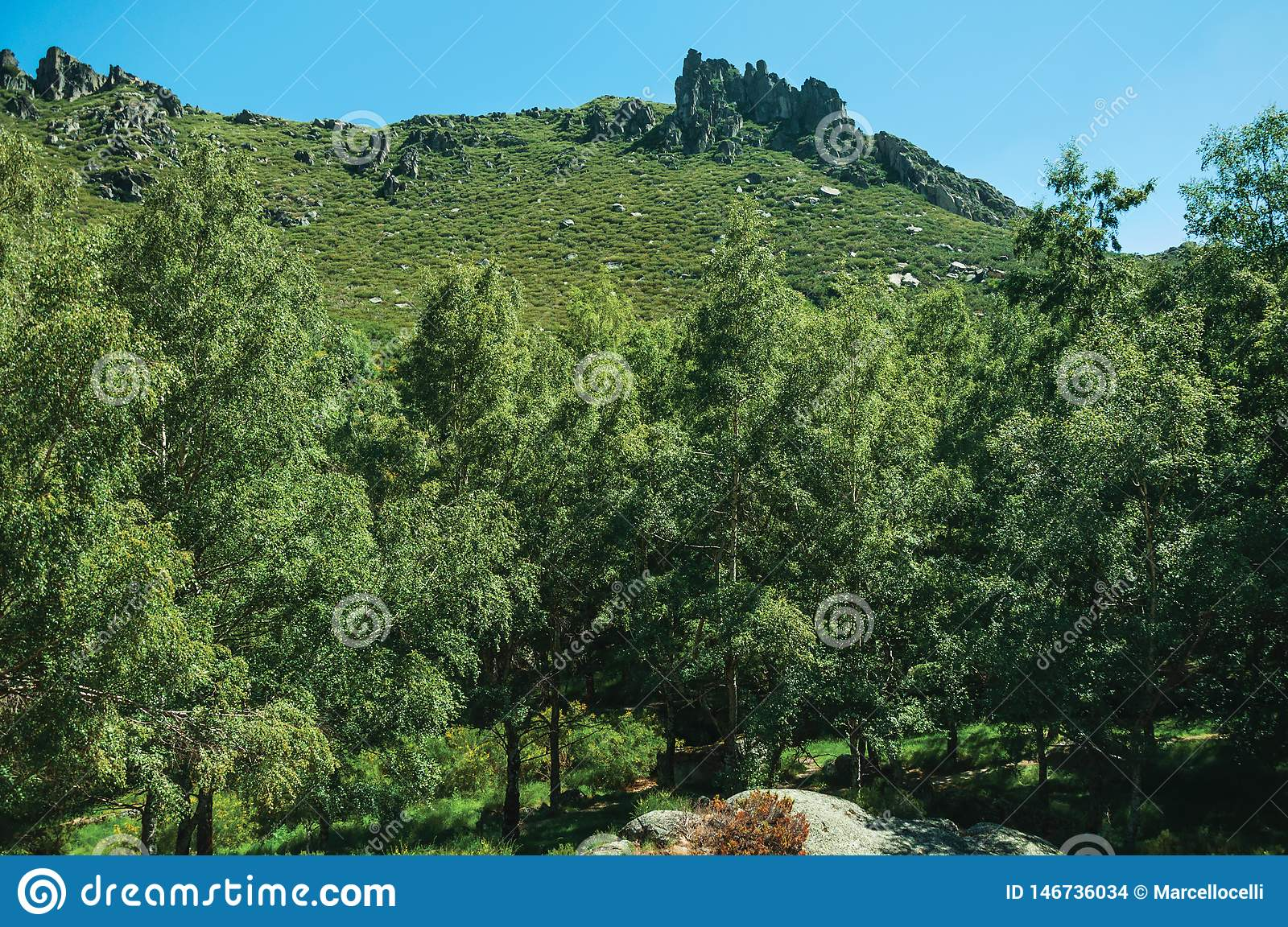 Landscape with rocky cliffs covered by bushes and forest