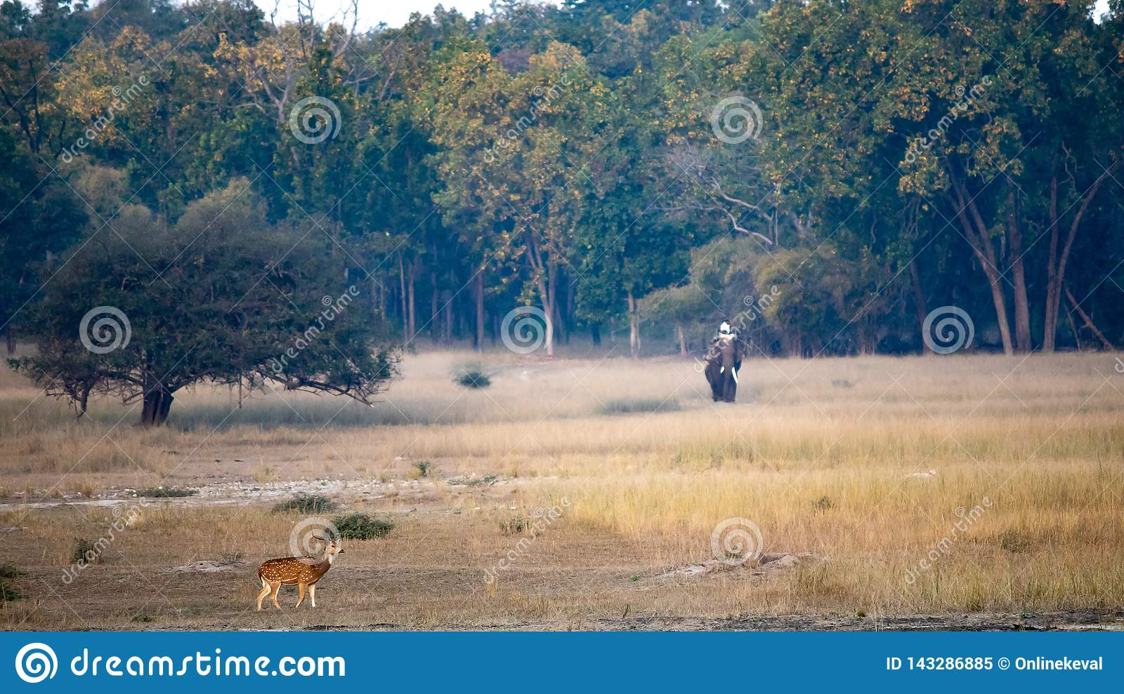 A landscape scenery click of spotted deer and elephant
