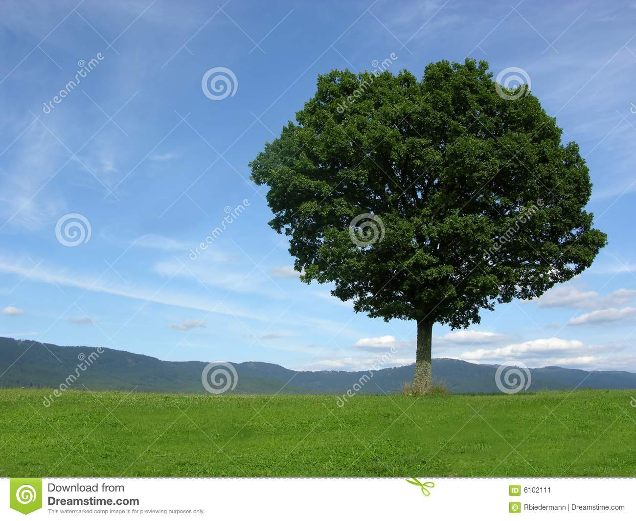 Landscape scenery with solitary tree