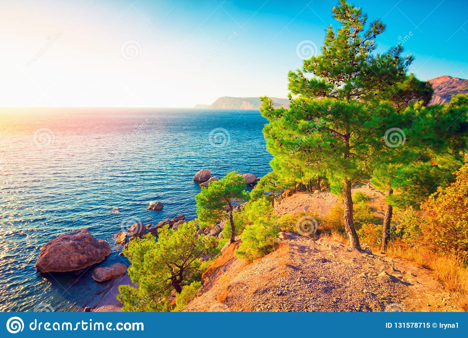 Landscape with sea coast with pine forest