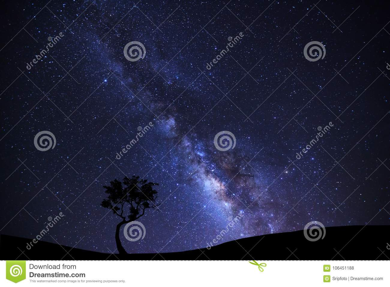 Landscape silhouette of tree with milky way galaxy and space dust in the universe, Night starry sky with stars