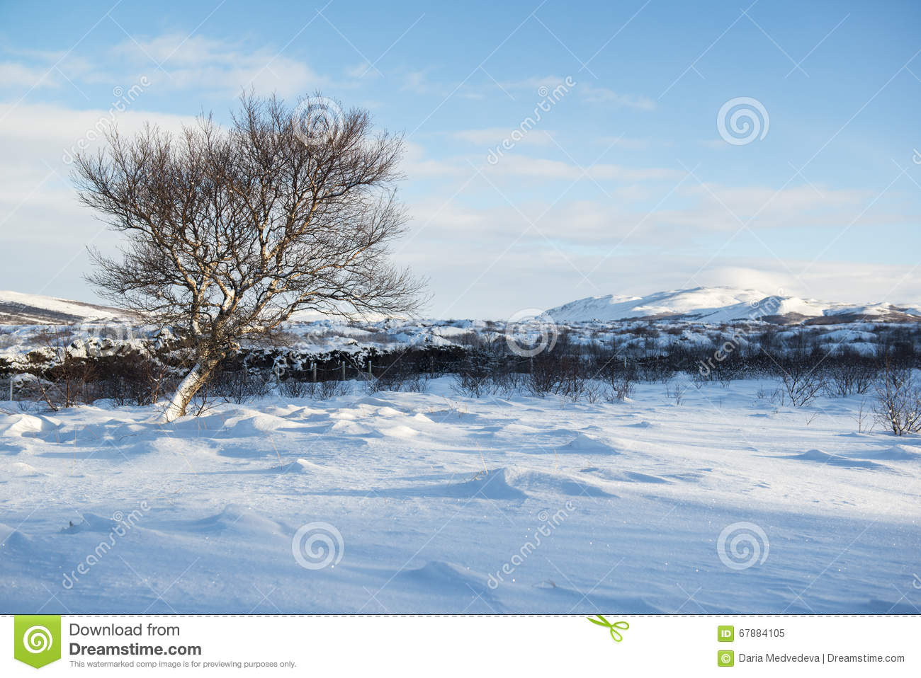 Landscape with snow dunes and a lonely winter tree, Iceland