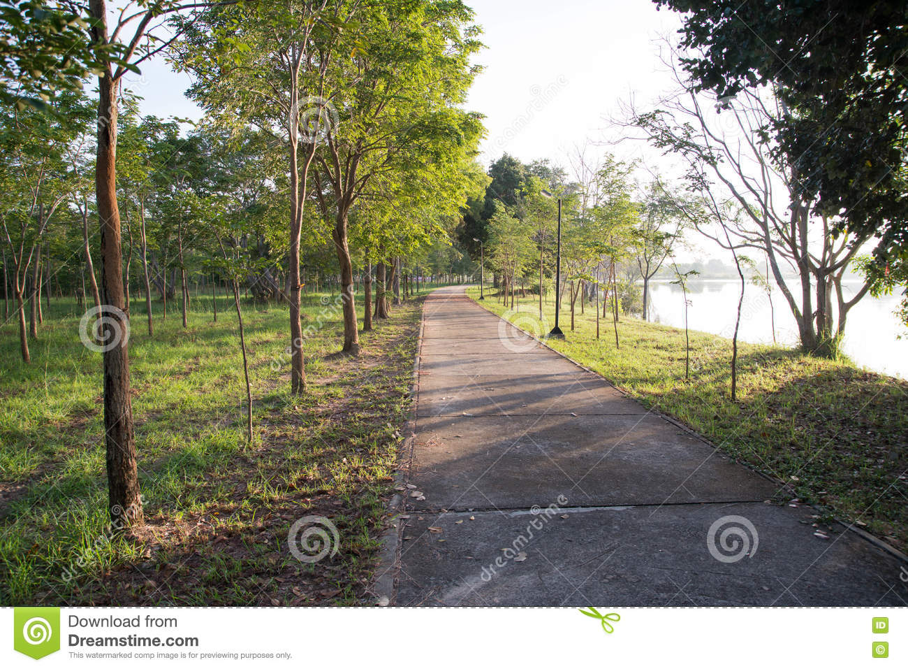 Landscape Of Straight Road Under The Trees Road Tree Stock Photo ... for Straight Road With Trees  103wja