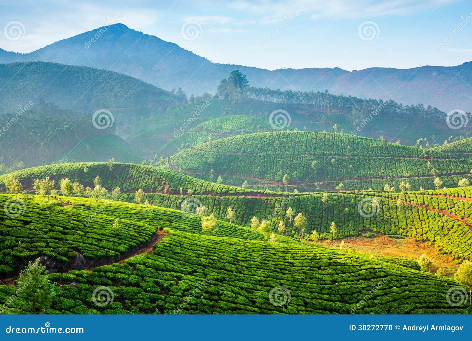Landscape of the tea plantations in India, Kerala Munnar.