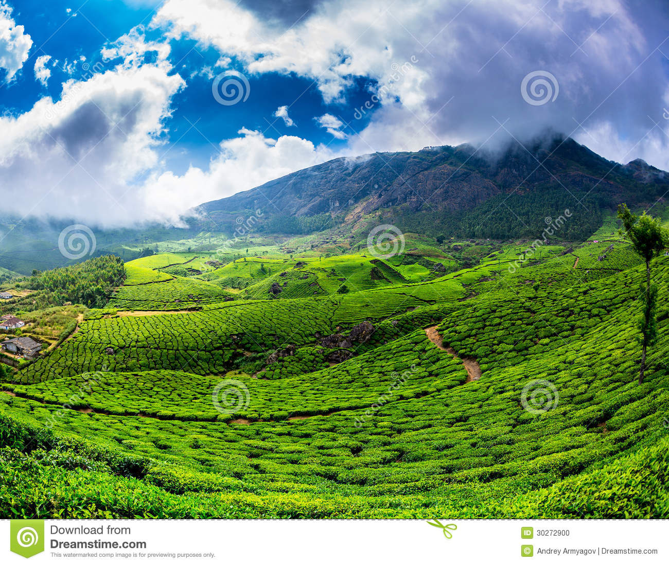Tea plantations in India stock photo. Image of hill ...