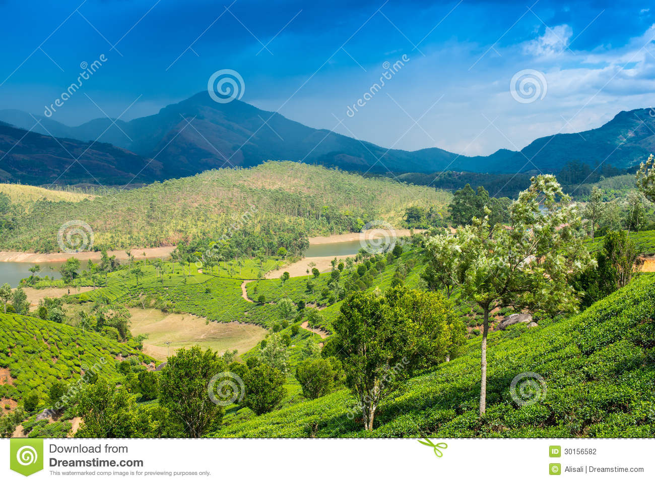 Landscape Tea Plantations, Mountains And The River In India Stock ...
