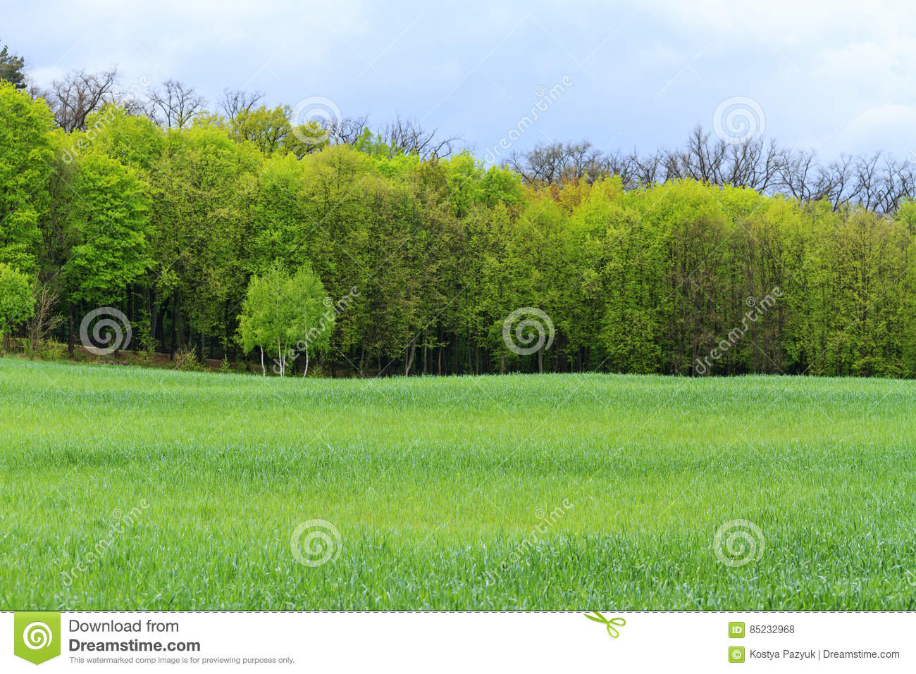 Landscape With Trees - Desktop Images On A Computer Stock Photo ...