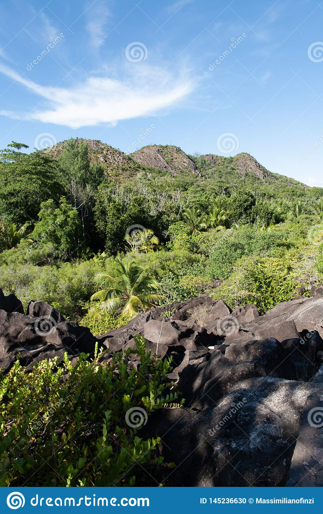 Lava stone formation into the bush in the natural park of curieuse island, Seychelles