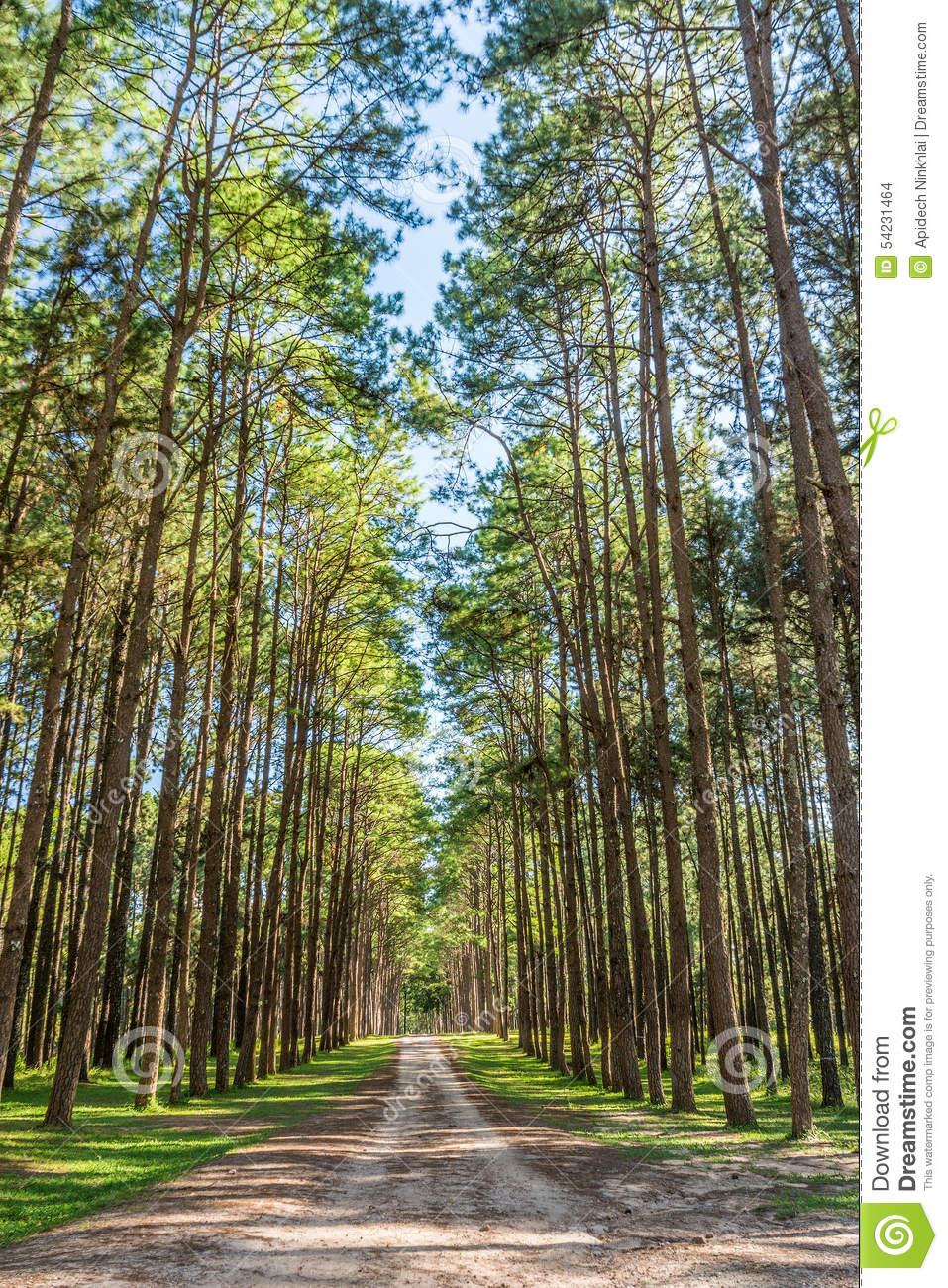Flower garden under pine trees : Landscape view of road and pine trees in botanical garden stock photo
