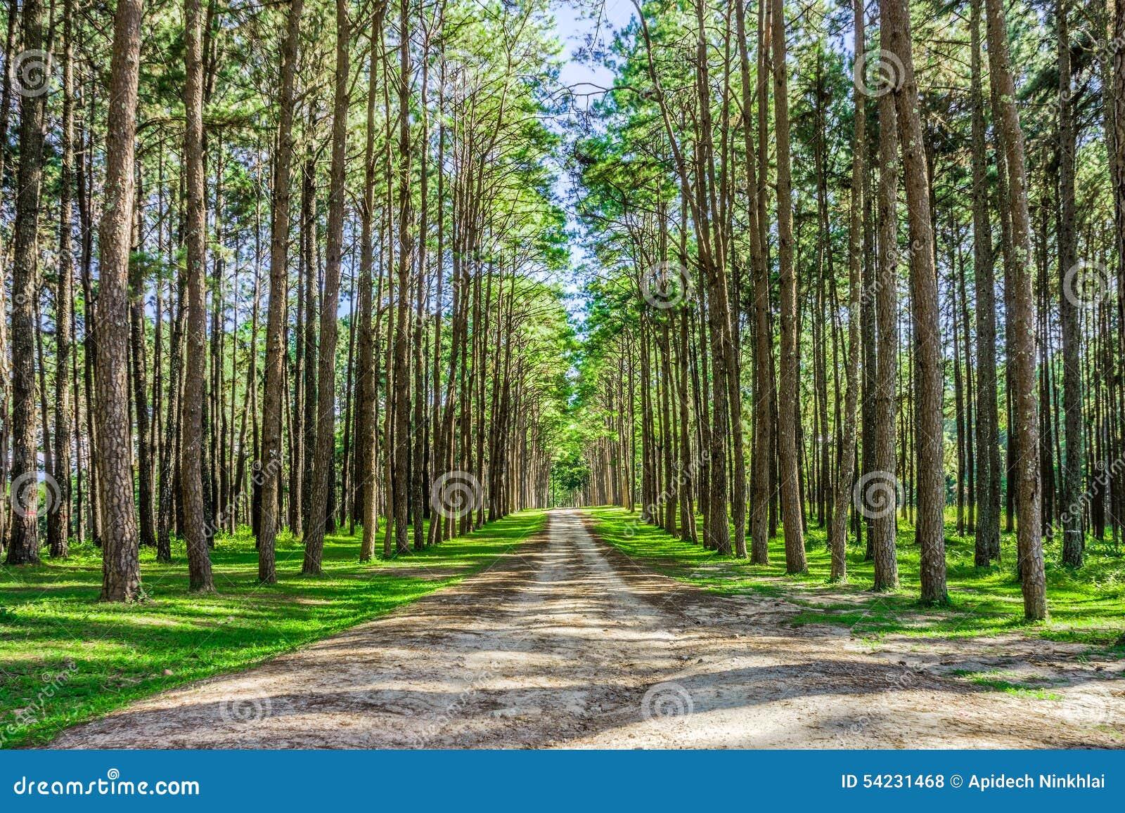 Botanical Garden Kaeo Landscape Northern Pine ...