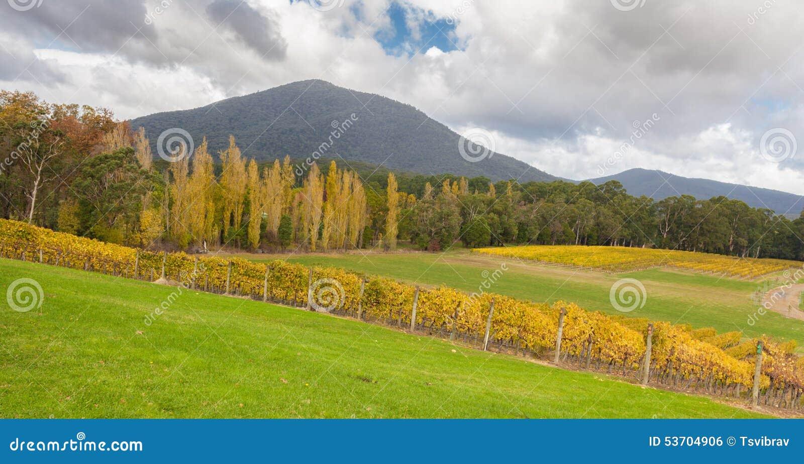 Landscape of vineyard fields in yarra valley australia in for Garden design yarra valley