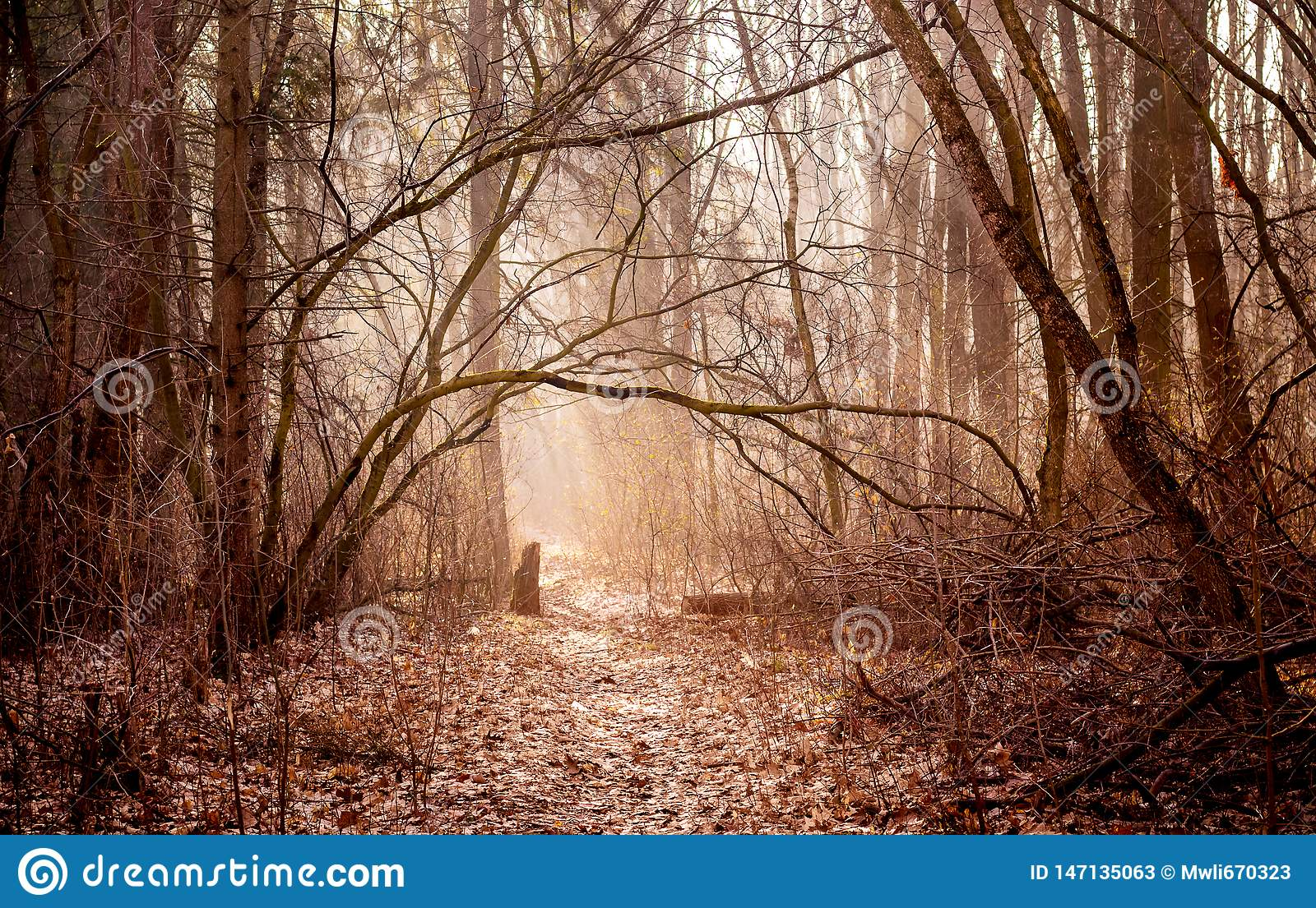 The landscape is in warm colors with autumn woods in the morning, the sun penetrates through the fog and illuminates the road in