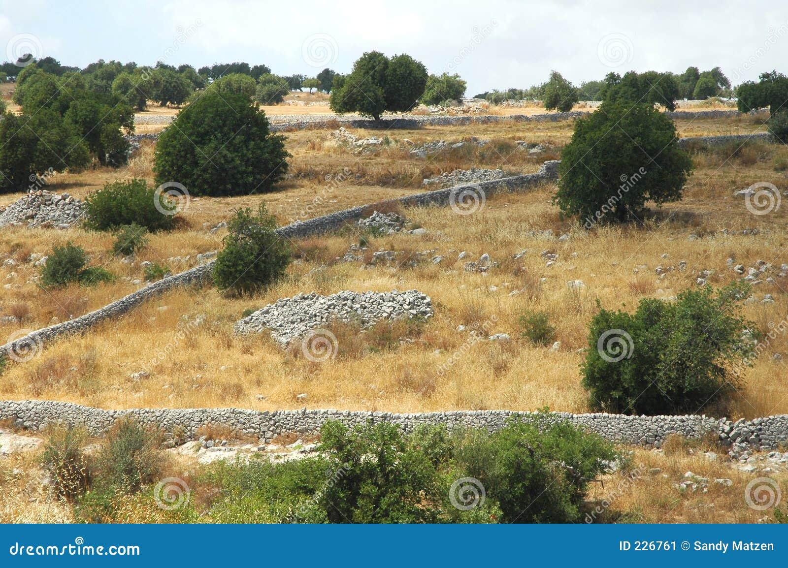 Landscape4 sicilian