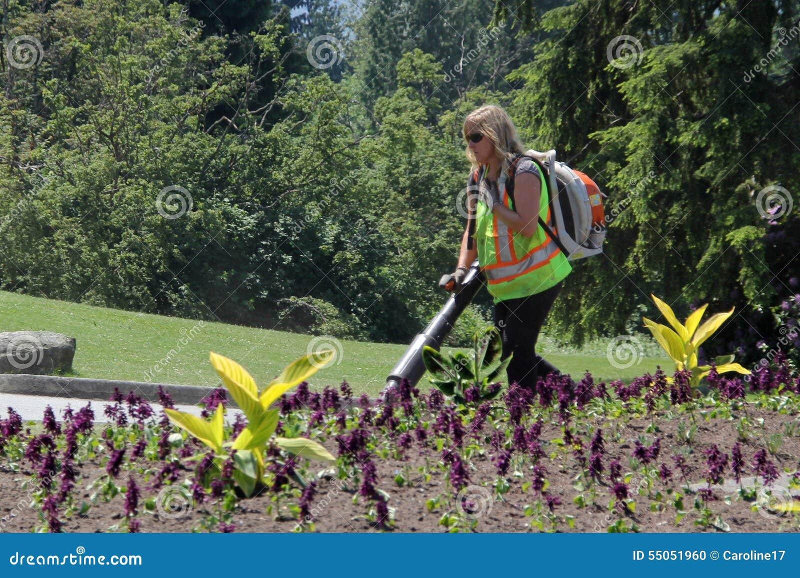 Landscaper Operating Leaf Blower Editorial Image Image