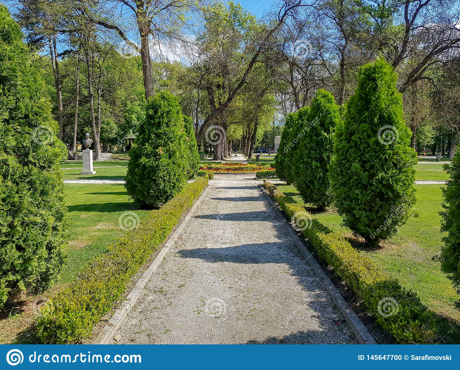 Landscaping decorative design. Raws of trees in city park with pathways
