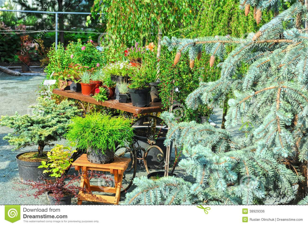 landscaping stock photo image 38929336 On different plants for landscaping