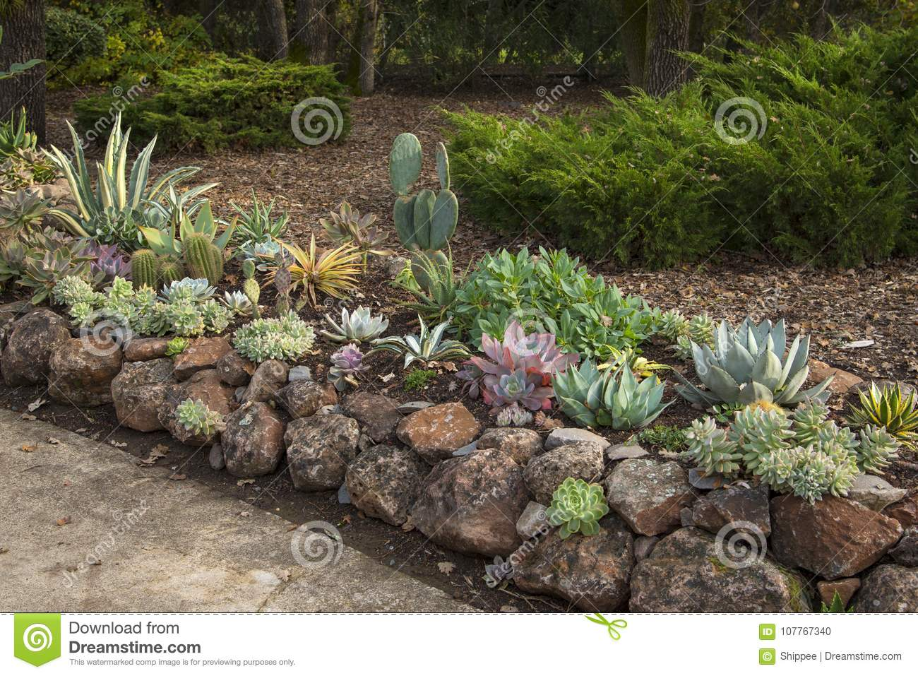 Landscaping with succulents and rocks - Landscaping With Succulents And Rocks Stock Photo - Image Of Nobody