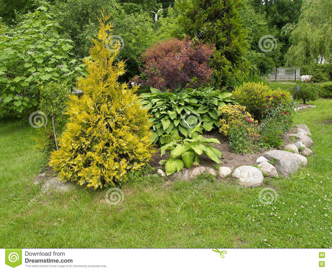 Landscaping With A Thuja Golden Stock Photo Image Of Barberry