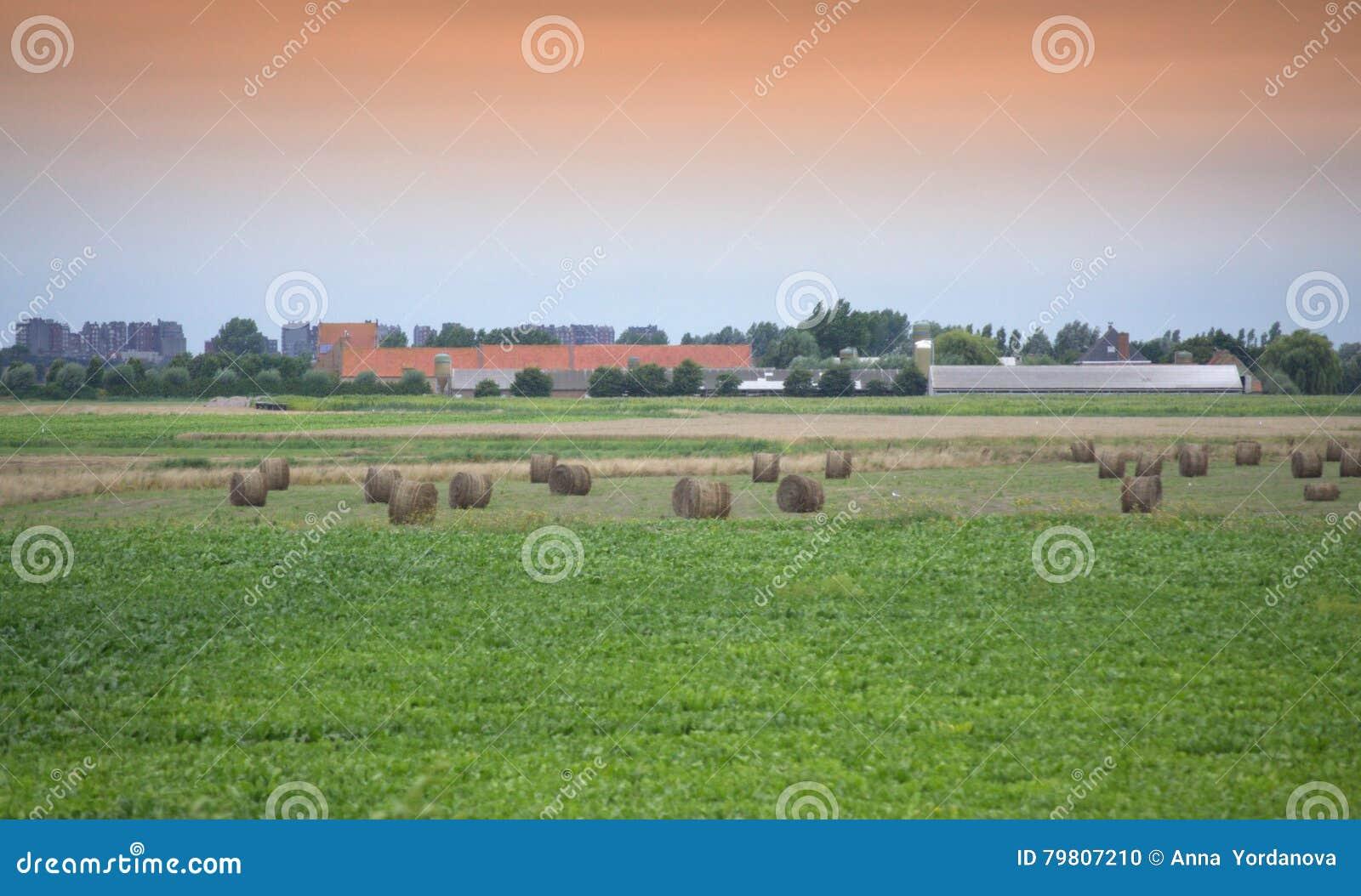 landschaft belgiens flandern stockfoto bild von ruhig infield 79807210. Black Bedroom Furniture Sets. Home Design Ideas