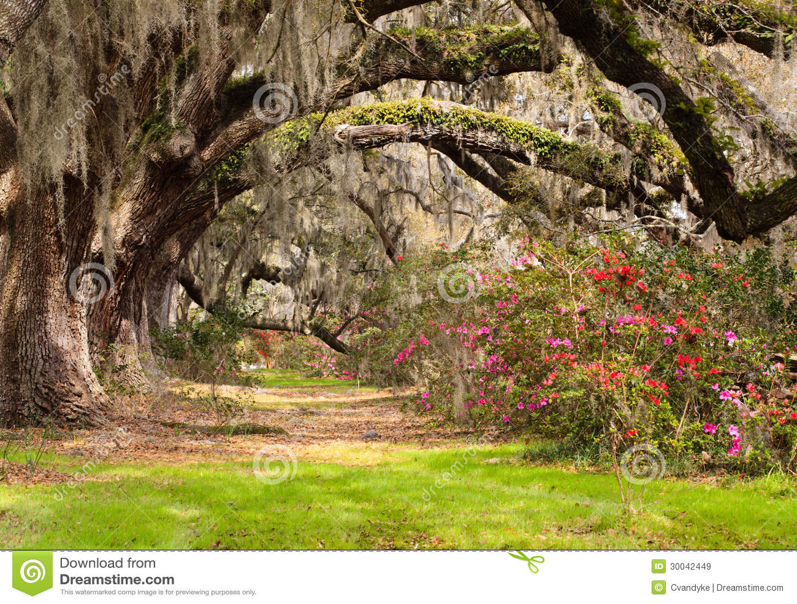 Tunnel-Live Oakbäume, -moos und -azaleen