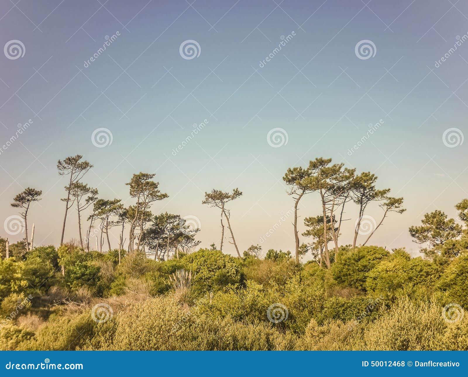 Landschaft in der Küste von Uruguay
