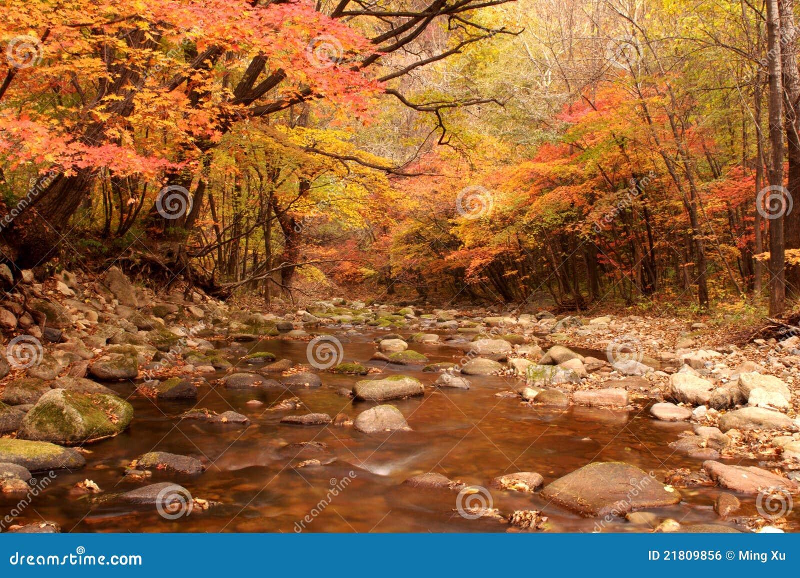 Landschaft des Herbstahornholzes