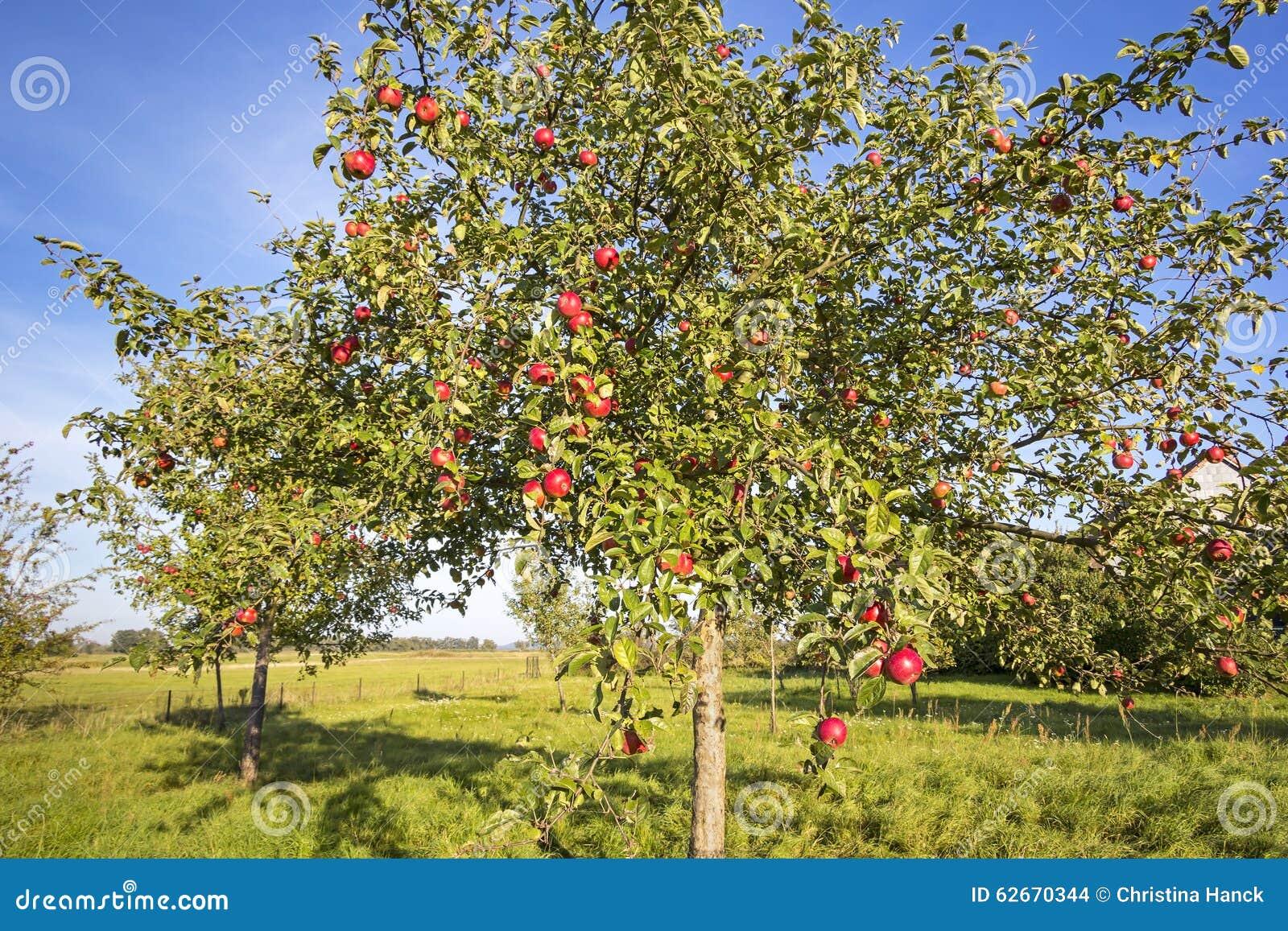 landschaft mit apfelbaum im herbst stockfoto bild von. Black Bedroom Furniture Sets. Home Design Ideas