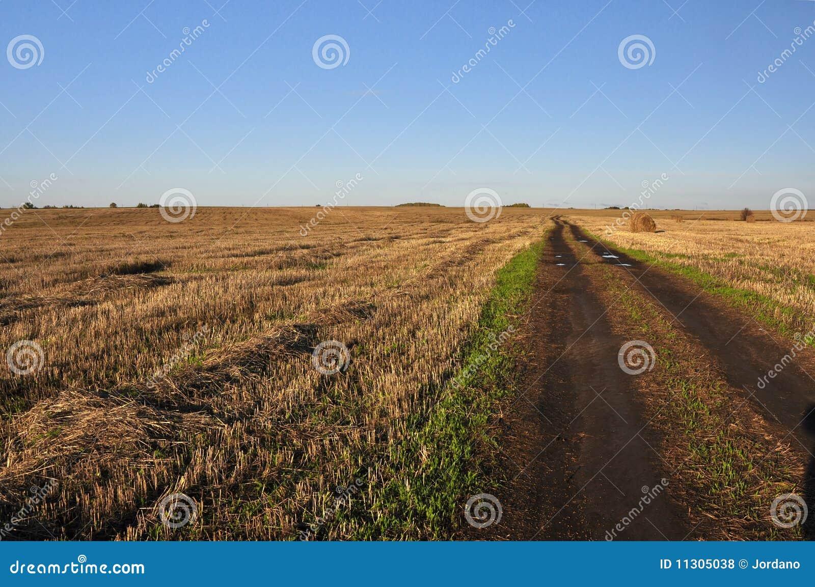 Landschaft mit Feld