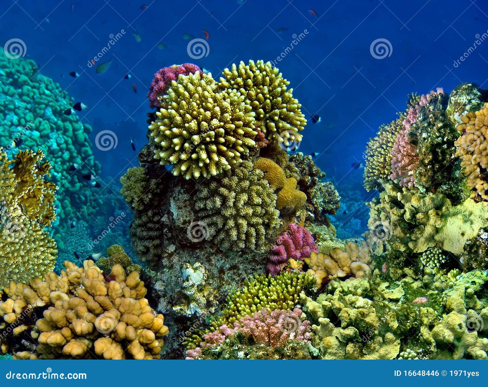 Landschaft unter Wasser