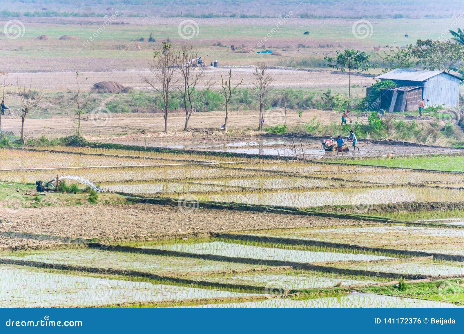 Landschaft von indischen Reisfeldern mit Arbeitskräften