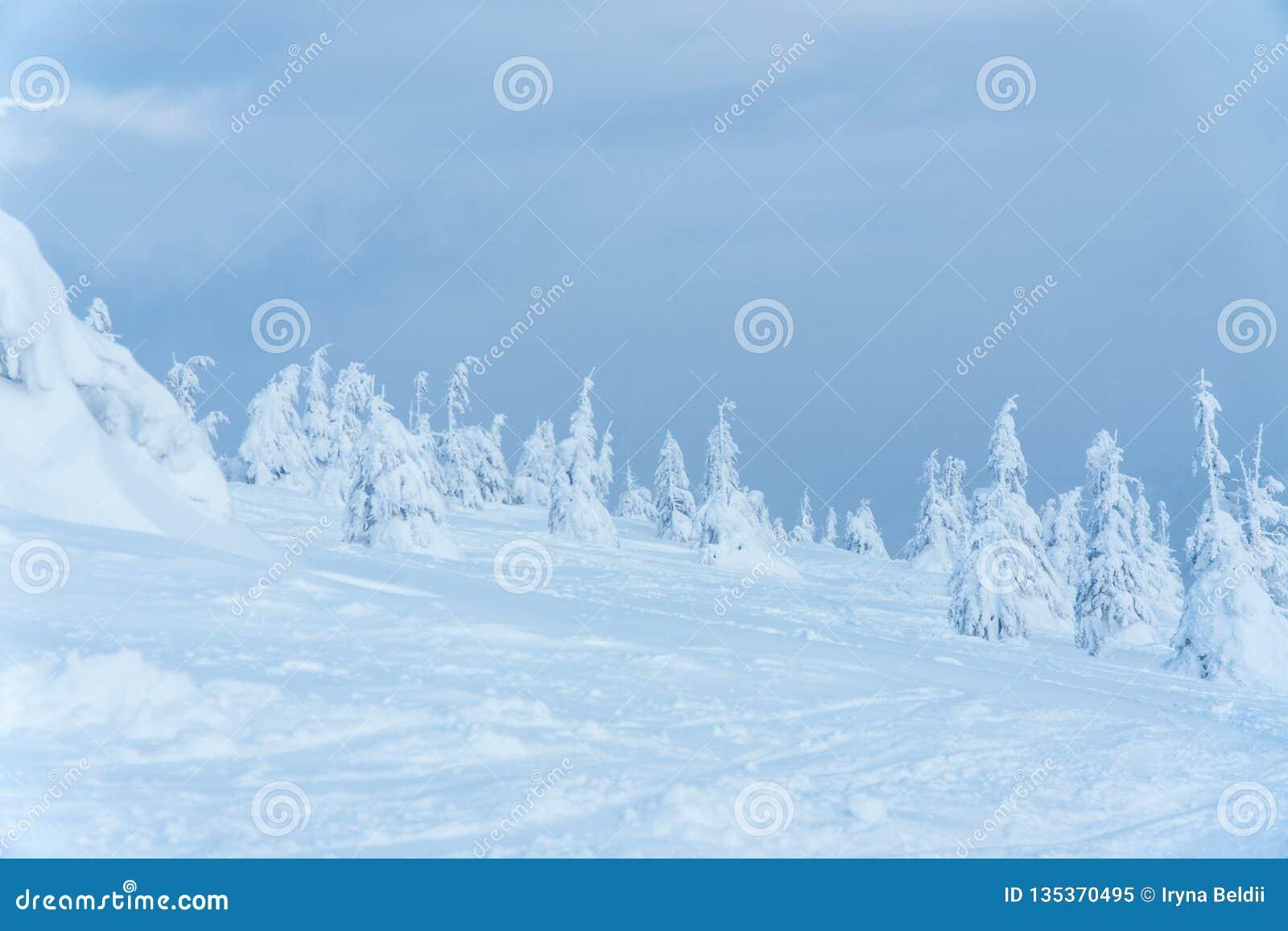 Landschaft, Wald Bäume im Schnee Der Himmel und die Bäume