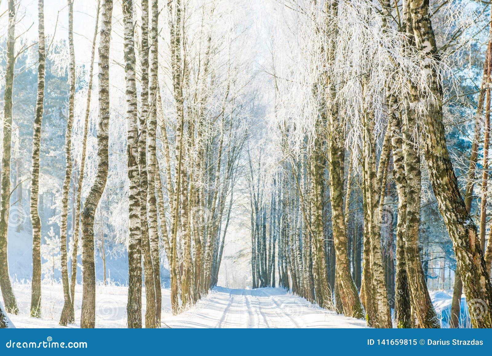 Landschaftsstraße im Winter, gefrorene Suppengrün