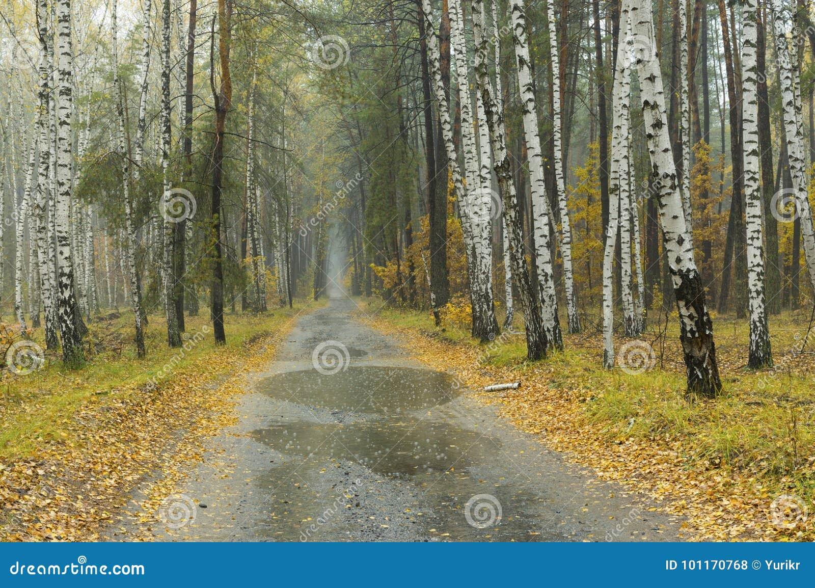 Landschap bij mist en regenachtig weer in gemengd bos