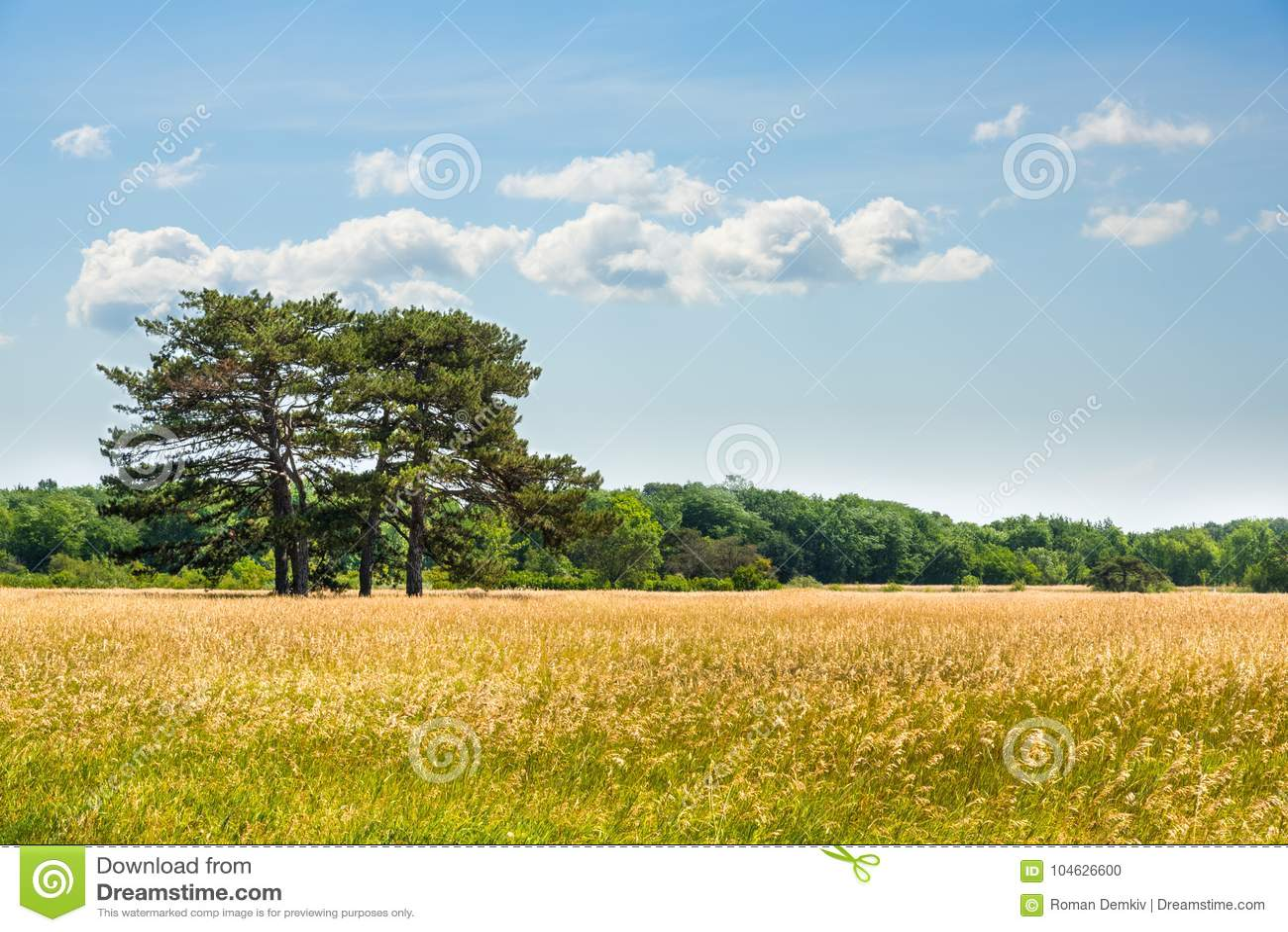 Download Landschap, Dendrological-Park Van De Nationale Reserve Askania-Nova, De Oekraïne Stock Foto - Afbeelding bestaande uit europa, toeristen: 104626600