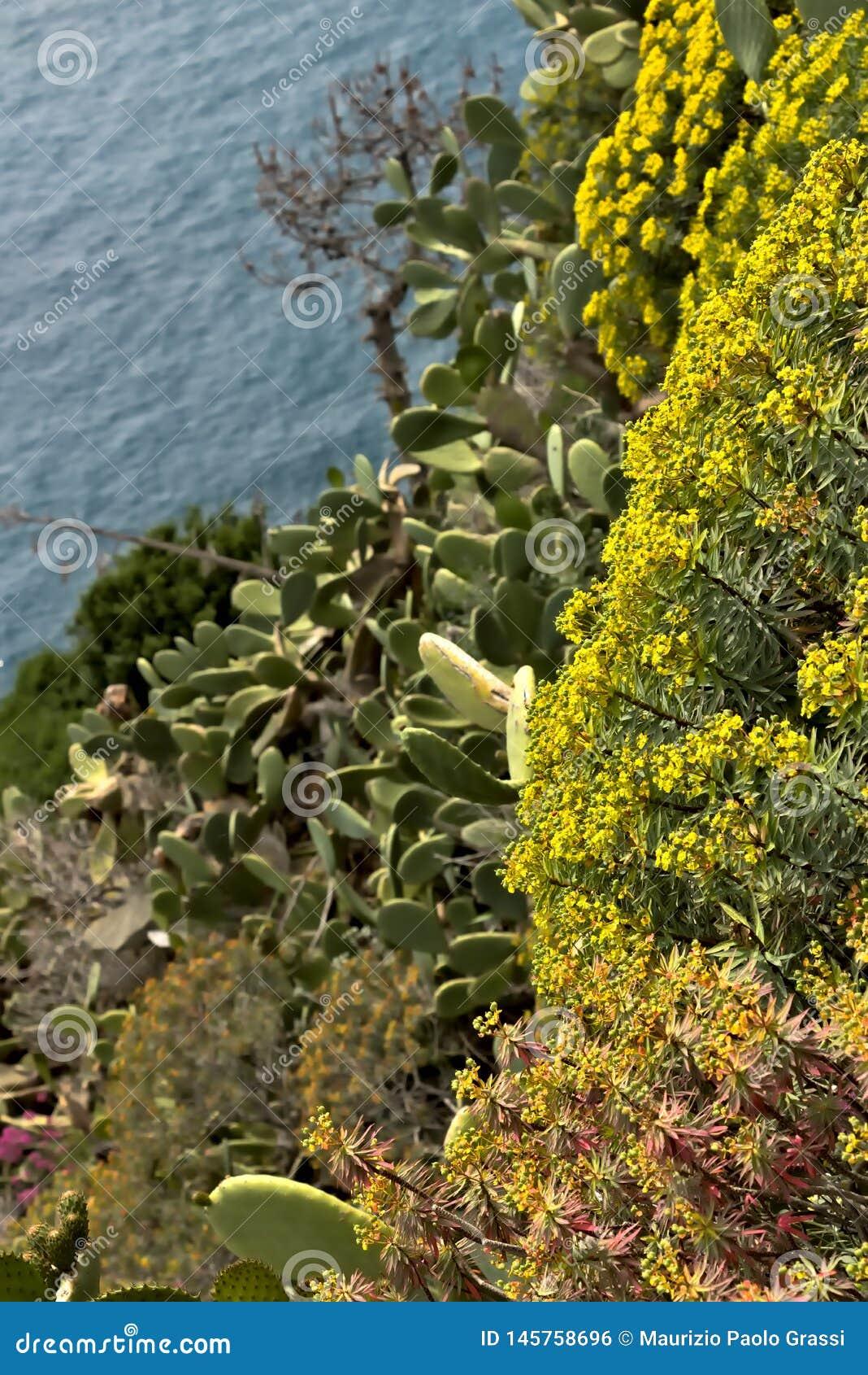 Landschap en vegetatie in Cinque Terre