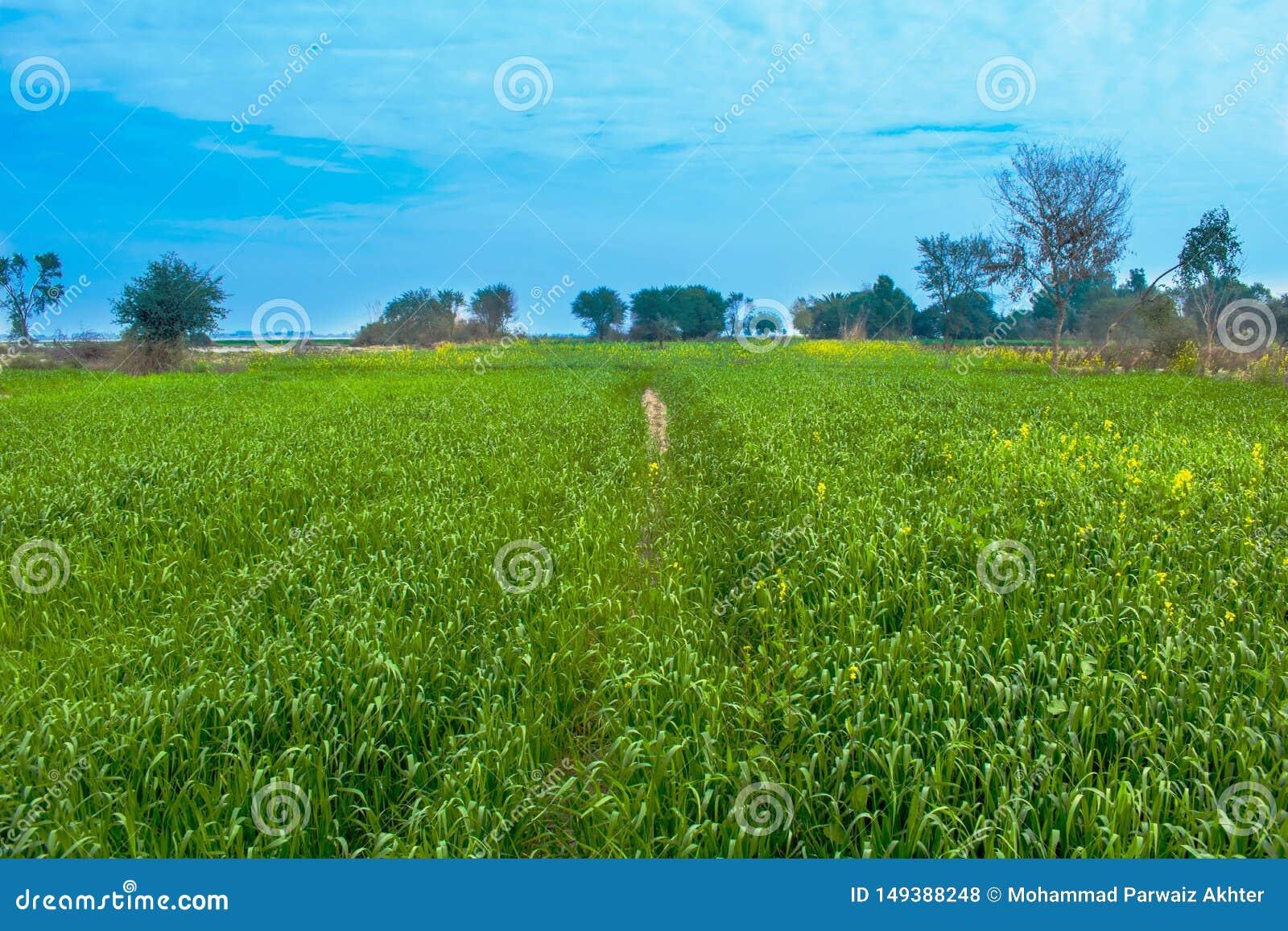 Landschap, groene gebieden met blauwe hemel