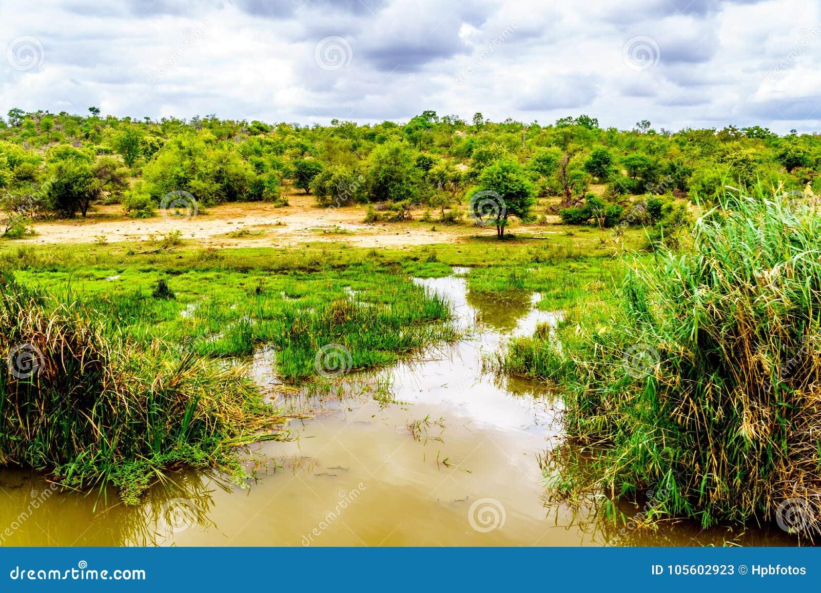 Landschap langs de Olifants-Rivier dichtbij het Nationale Park van Kruger in Zuid-Afrika
