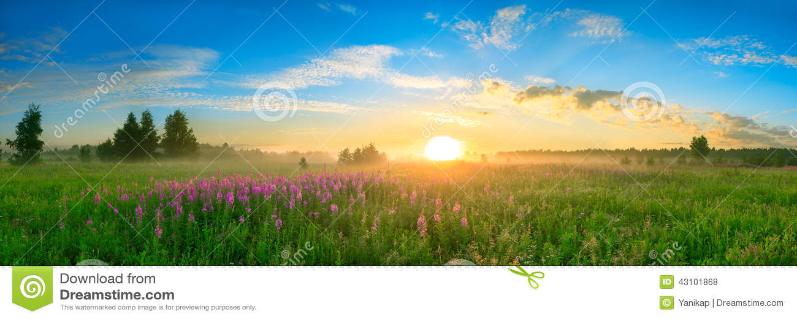 Landschap met de zonsopgang, een het tot bloei komen weidepanorama