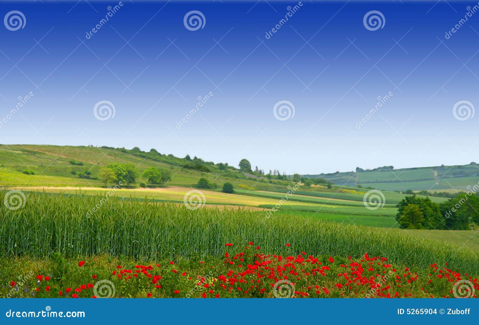 Landschap met een bloem van de Papaver