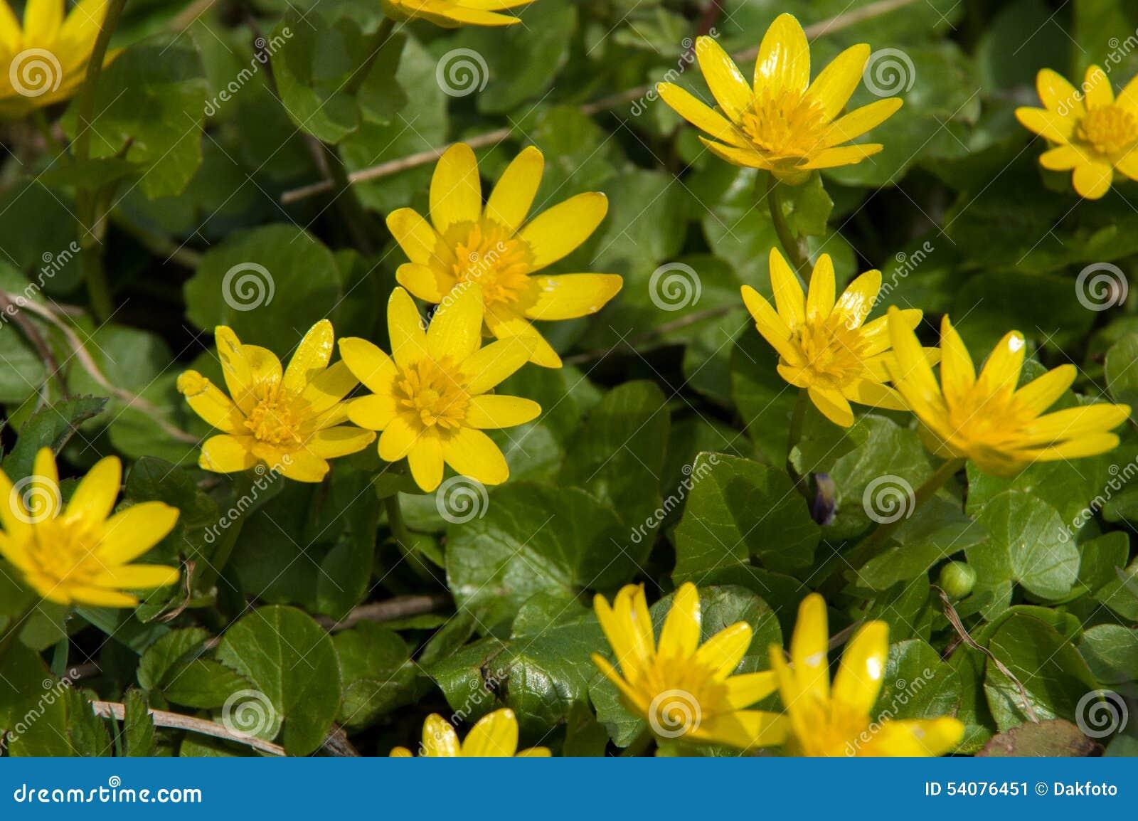 Landschap met gele bloemen op de achtergrond