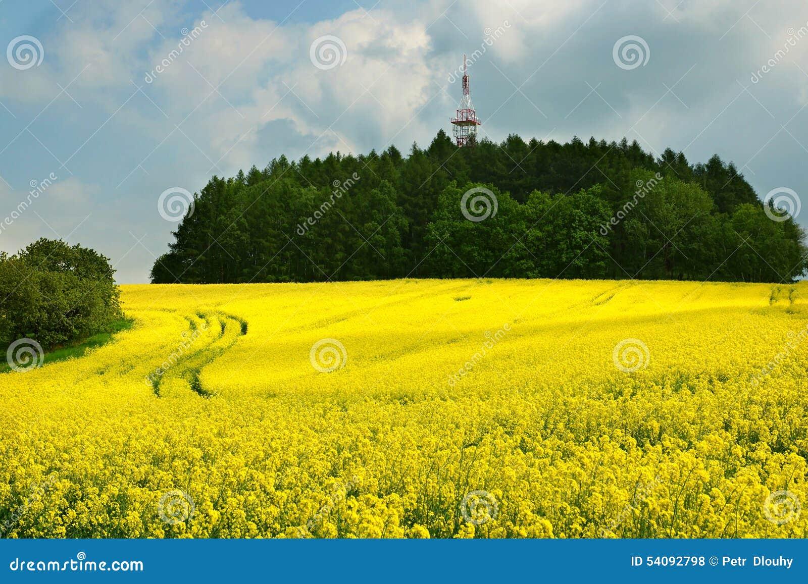 Landschap met raapzaadbloemen