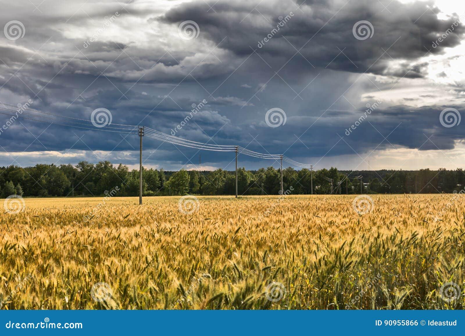 Landschap met rogge de rijpe gebied en lijn van de elektriciteitstransmissie