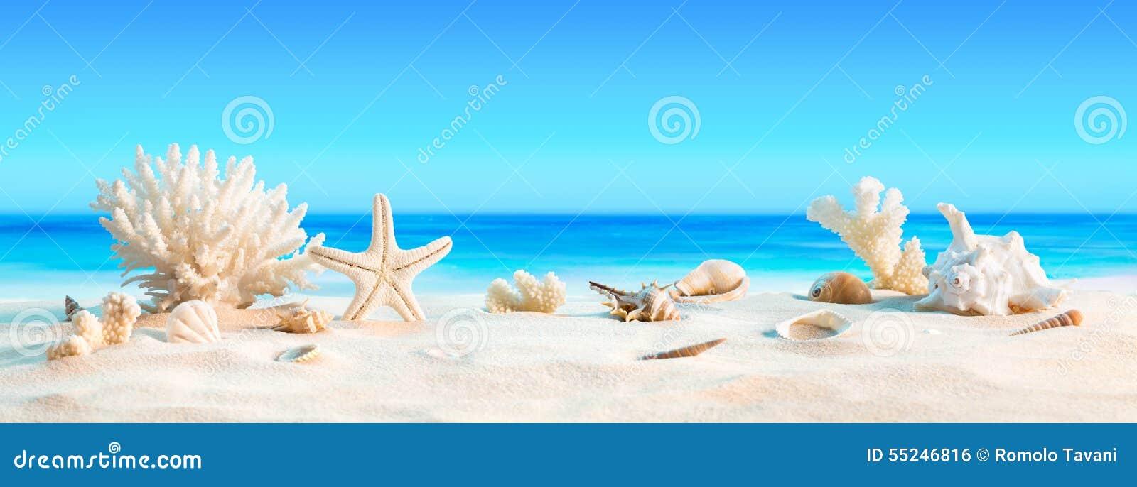 Landschap met zeeschelpen op tropisch strand