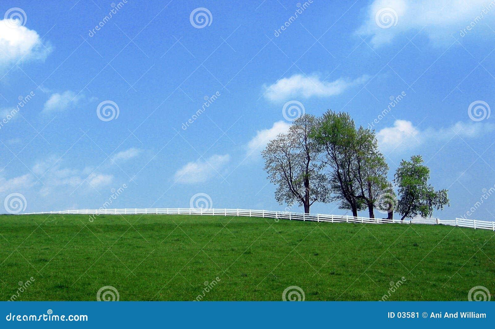 Landschap - scheiding