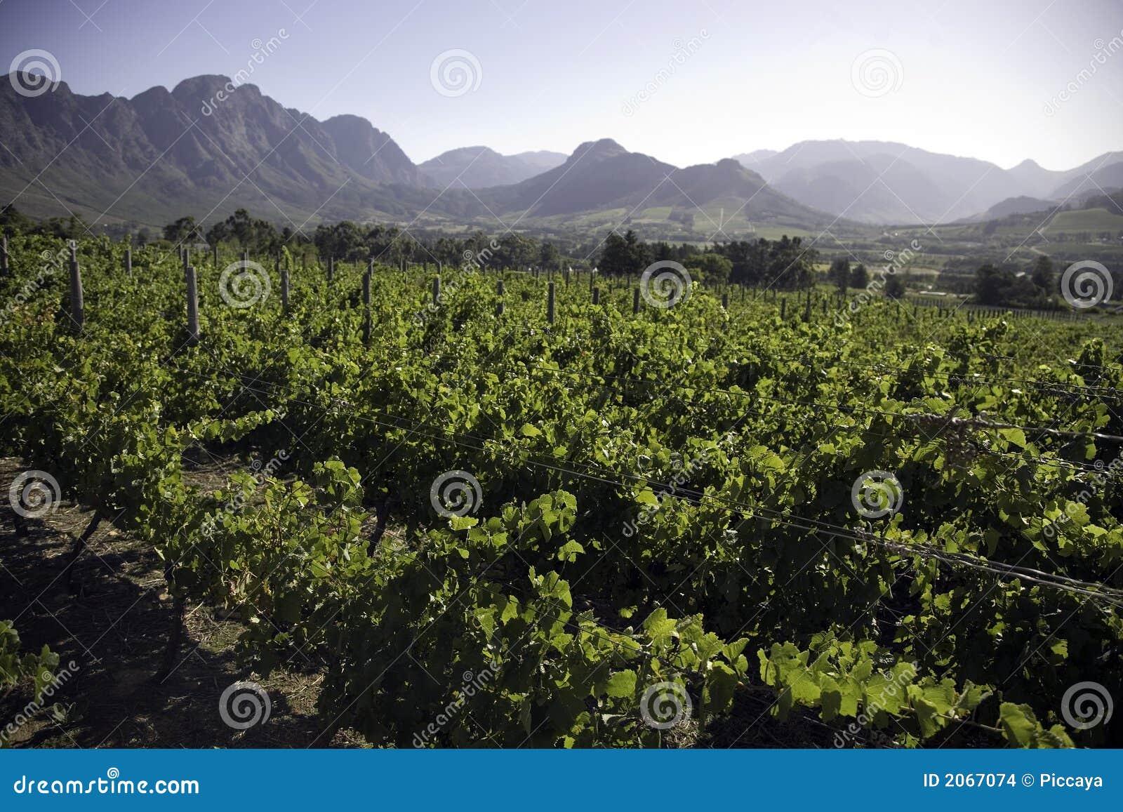 Landschap van de wijnmakerijen