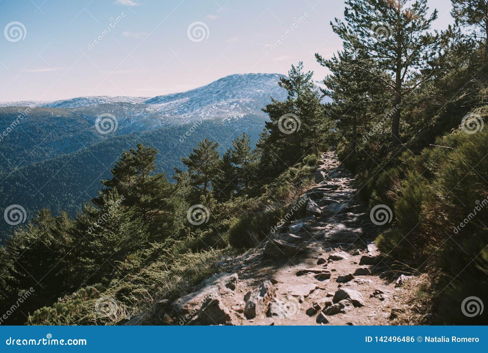 Landschap van een weg in het bos en de bergen