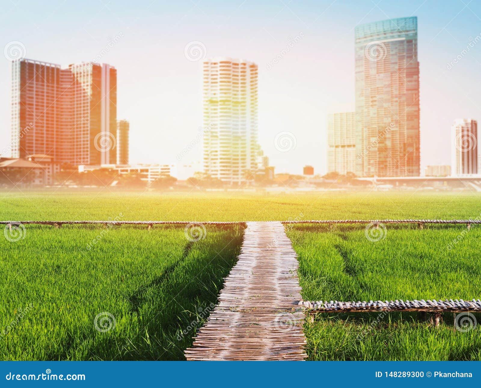 Landschap van groen padieveld over cityscape onduidelijk beeldachtergrond