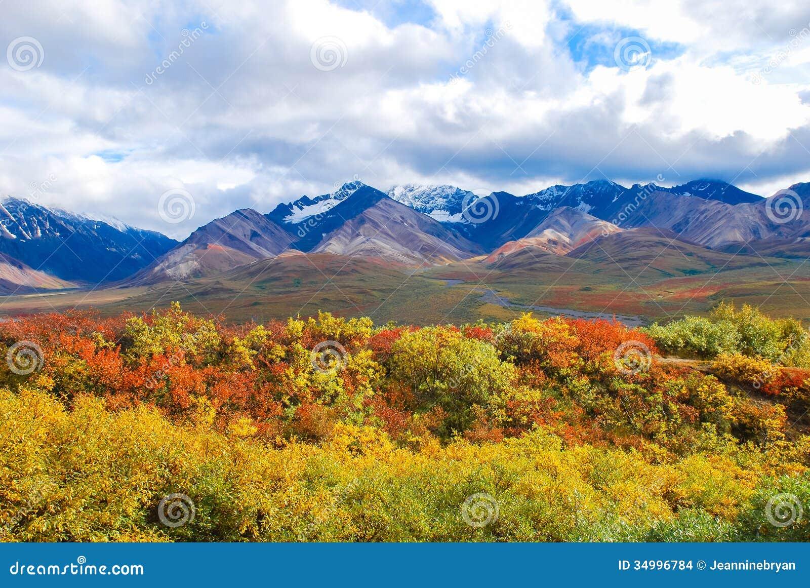 Landschap van het Denali het Nationale Park