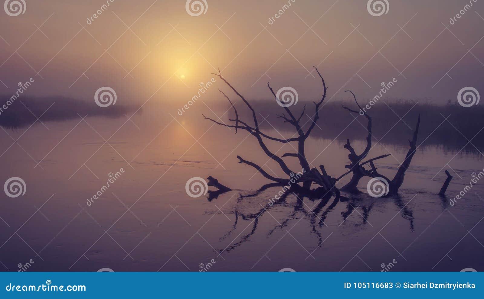Landschap van rivier op ochtend nevelige zonsopgang Oude droge boom in water in vroege mistige dageraad Toneel rivier